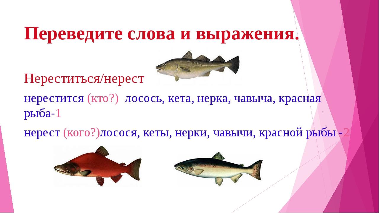 Переведите слова и выражения. Нереститься/нерест нерестится (кто?) лосось, ке...
