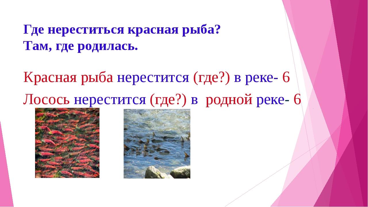Где нереститься красная рыба? Там, где родилась. Красная рыба нерестится (где...