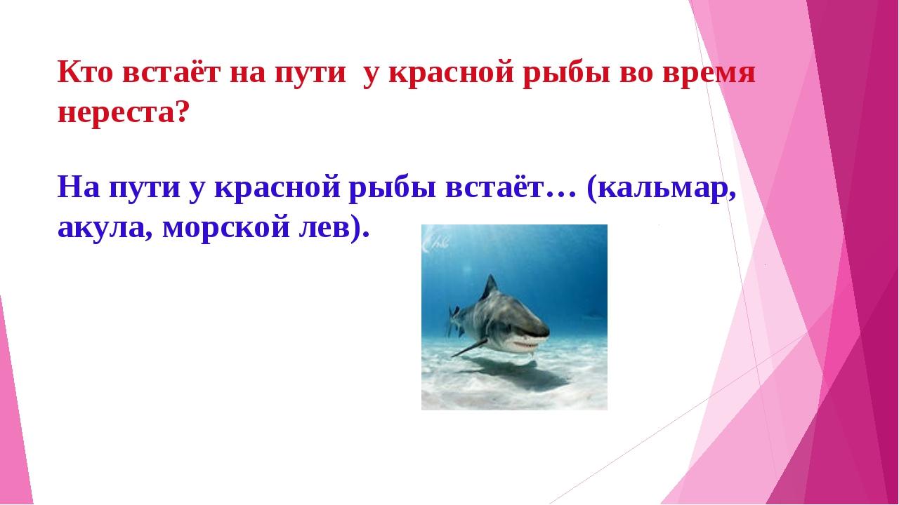 Кто встаёт на пути у красной рыбы во время нереста? На пути у красной рыбы вс...