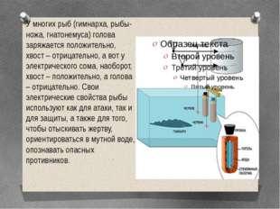 У многих рыб (гимнарха, рыбы-ножа, гнатонемуса) голова заряжается положительн