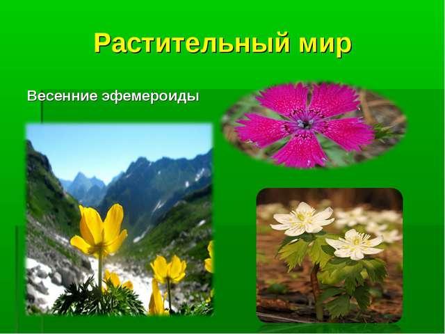 Растительный мир Весенние эфемероиды