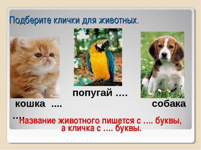 Подберите клички для животных. Название животного пишется с …. буквы, а клич...
