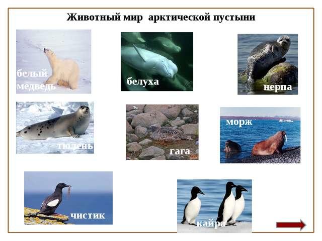 Животный мир арктической пустыни белый медведь чистик гага белуха нерпа кайра...