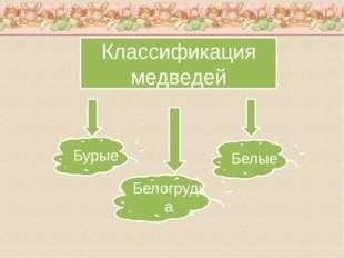 Классификация медведей Бурые Белогрудка Белые
