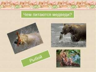 Чем питаются медведи? Рыбой