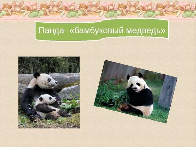 Панда- «бамбуковый медведь»