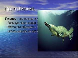 Место обитания. Утконос– это ночное животное, и достаточно большую часть сво