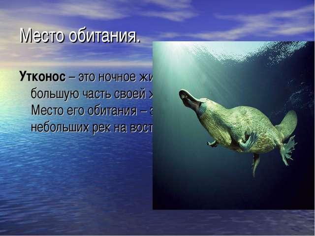 Место обитания. Утконос– это ночное животное, и достаточно большую часть сво...