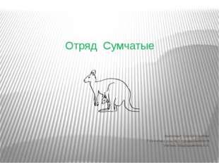 Отряд Сумчатые Выполнил: Сергей Коротких 7 «А» класс осш № 5 города Шымкента