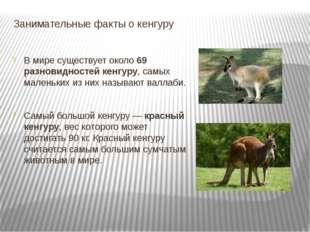 Занимательные факты о кенгуру В мире существует около69 разновидностей кенгу