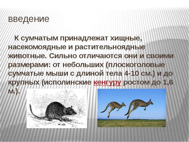 введение К сумчатым принадлежат хищные, насекомоядные и растительноядные живо...