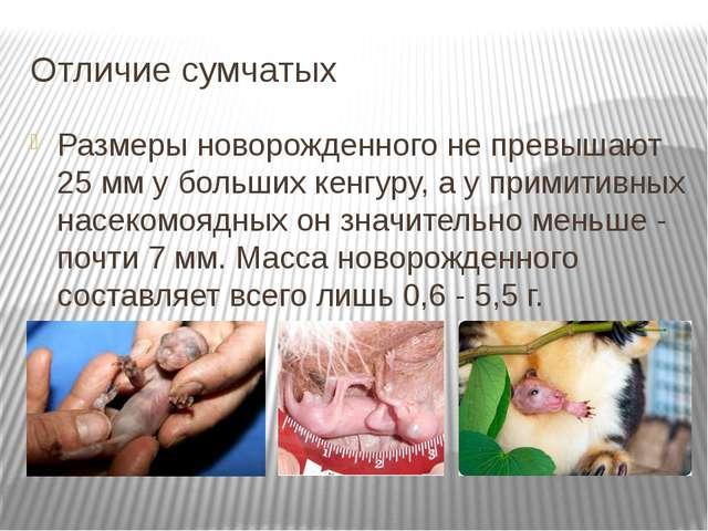 Отличие сумчатых Размеры новорожденного не превышают 25 мм у больших кенгуру,...