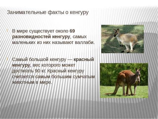 Занимательные факты о кенгуру В мире существует около69 разновидностей кенгу...