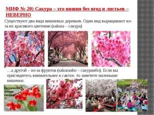 МИФ № 20) Сакура – это вишня без ягод и листьев – НЕВЕРНО Существуют два вида