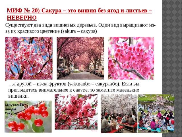 МИФ № 20) Сакура – это вишня без ягод и листьев – НЕВЕРНО Существуют два вида...
