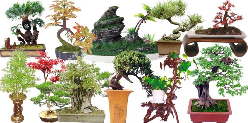 http://www.ostrovlubvi.com/wp-content/uploads/2012/09/iskustvo_bonsay4.jpg