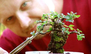 http://mixstory.ru/wp-content/uploads/2014/03/artist-bonsai1.jpg