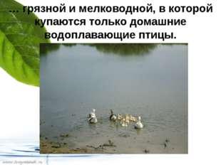 … грязной и мелководной, в которой купаются только домашние водоплавающие пти