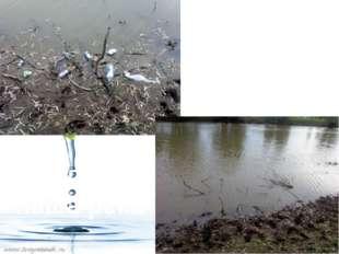 Вот так сейчас выглядит наша река