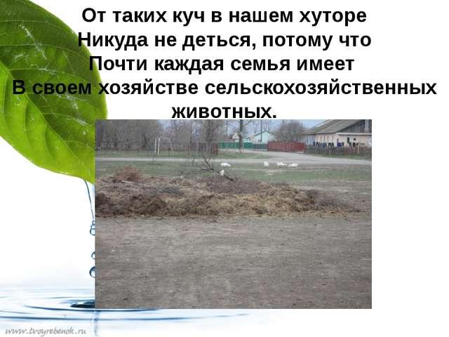 От таких куч в нашем хуторе Никуда не деться, потому что Почти каждая семья и...