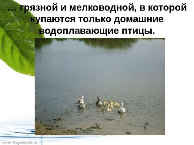 … грязной и мелководной, в которой купаются только домашние водоплавающие пти...