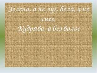 Зелена, а не луг, бела, а не снег, Кудрява, а без волос