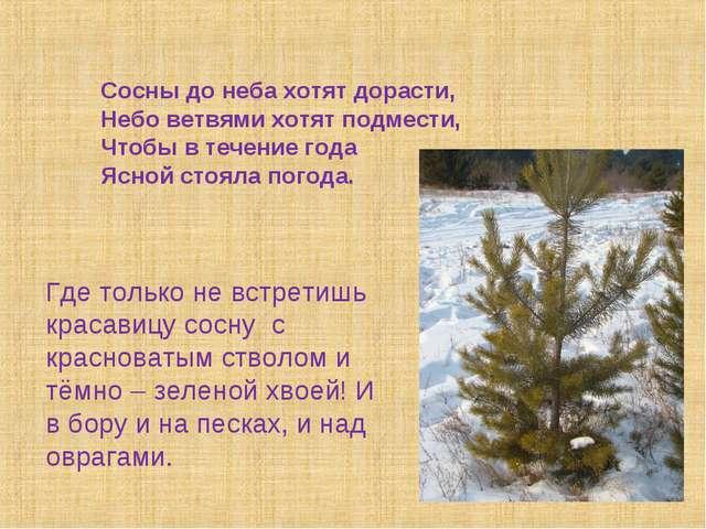 Сосны до неба хотят дорасти, Небо ветвями хотят подмести, Чтобы в течение го...