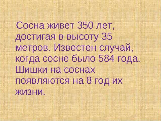 Сосна живет 350 лет, достигая в высоту 35 метров. Известен случай, когда сос...