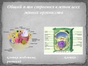 Общий план строения клеток всех живых организмов клетка животных клетка расте