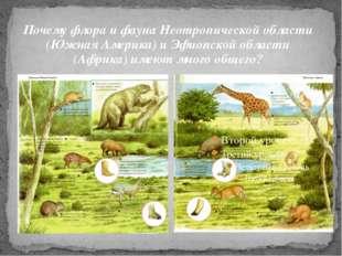 Почему флора и фауна Неотропической области (Южная Америка) и Эфиопской облас