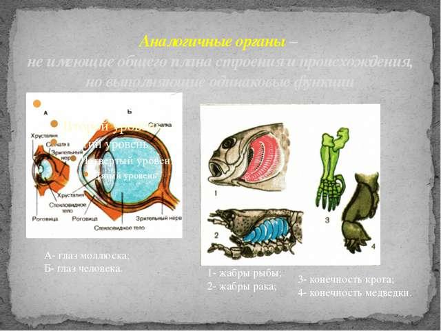 Аналогичные органы – не имеющие общего плана строения и происхождения, но вып...