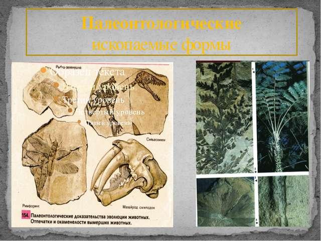 Палеонтологические ископаемые формы