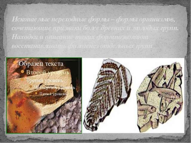 Ископаемые переходные формы – формы организмов, сочетающие признаки более дре...