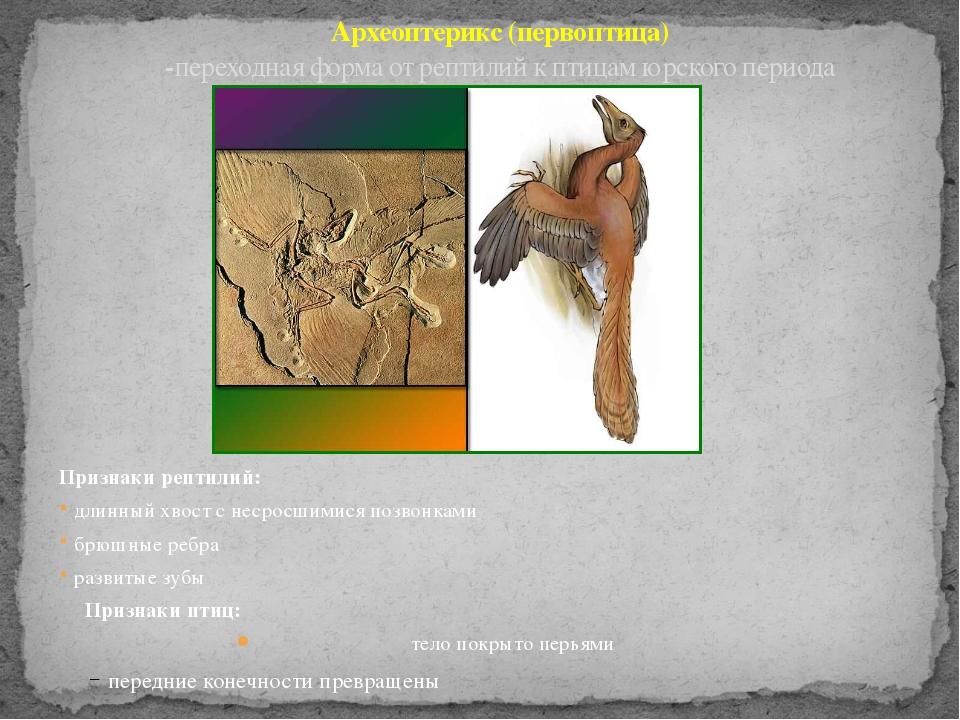 Археоптерикс (первоптица) -переходная форма от рептилий к птицам юрского пери...