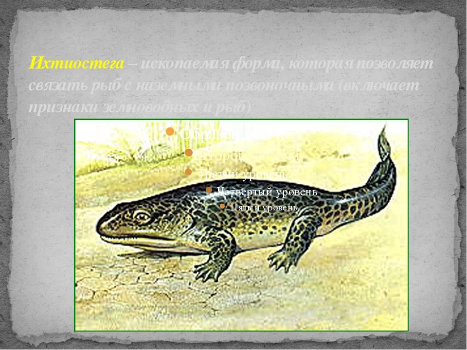 Ихтиостега – ископаемая форма, которая позволяет связать рыб с наземными позв...