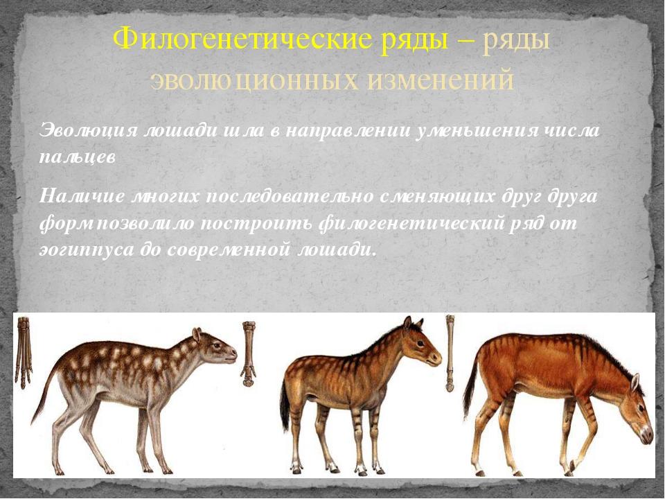 Эволюция лошади шла в направлении уменьшения числа пальцев Наличие многих пос...