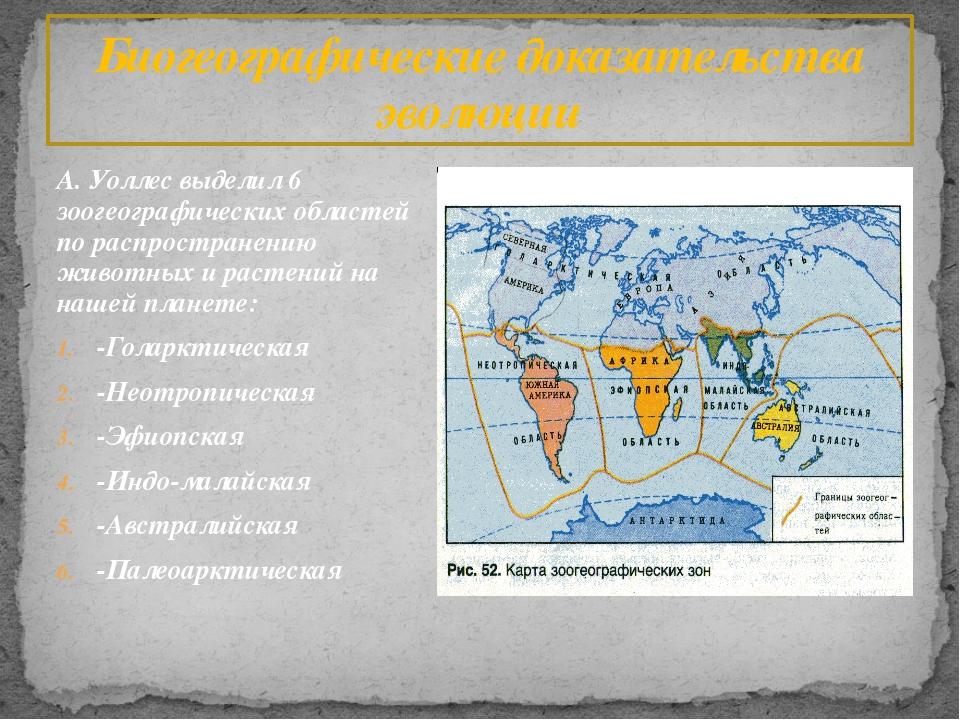 А. Уоллес выделил 6 зоогеографических областей по распространению животных и...