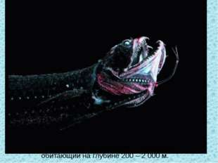 Так выглядит паралипарис - Paraliparis, обитающий на глубине 200 – 2 000 м.