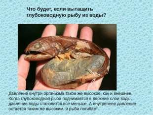 Давление внутри организма такое же высокое, как и внешнее. Когда глубоководна