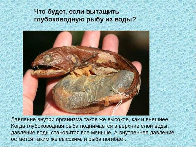 Давление внутри организма такое же высокое, как и внешнее. Когда глубоководна...