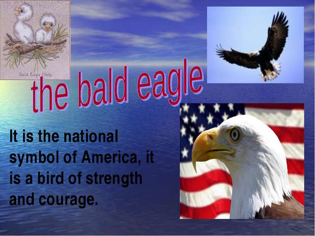 It is the national symbol of America, it is a bird of strength and courage.
