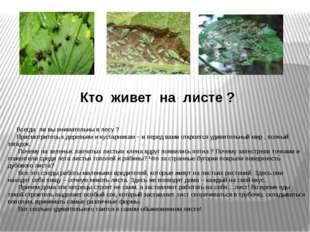 Кто живет на листе ? Всегда ли вы внимательны в лесу ? Присмотритесь к деревь