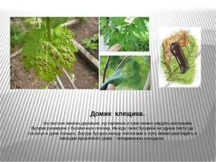 Домик клещика. На листьях многих деревьев, кустарников и трав можно увидеть м