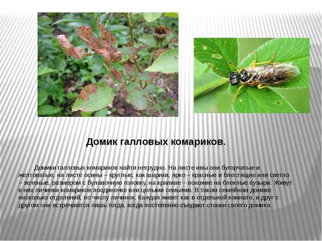 Домик галловых комариков. Домики галловых комариков найти нетрудно. На листе...