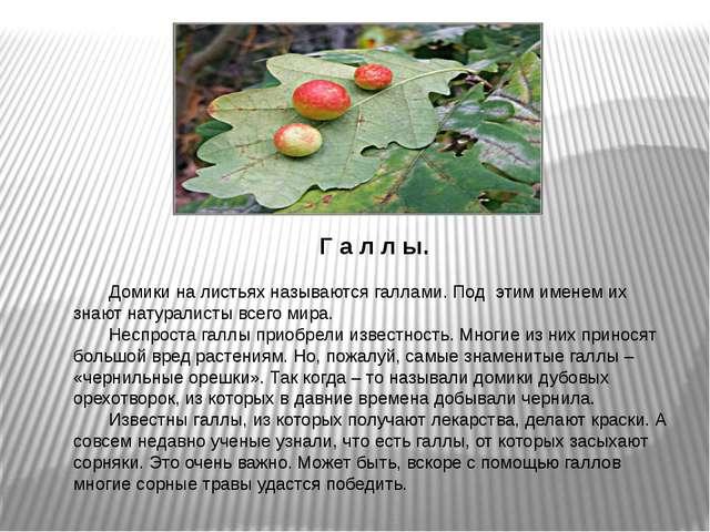 Г а л л ы.  Домики на листьях называются галлами. Под этим именем их знают...