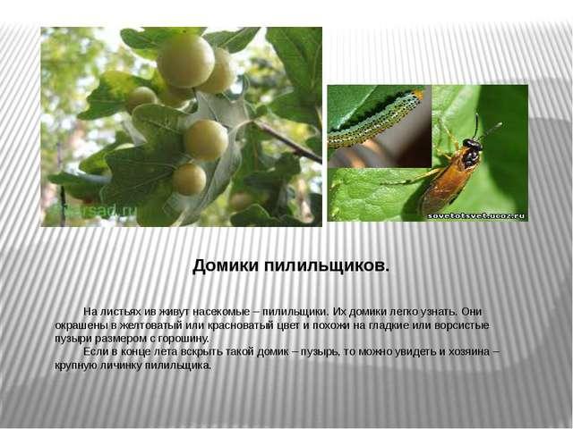 Домики пилильщиков. На листьях ив живут насекомые – пилильщики. Их домики ле...