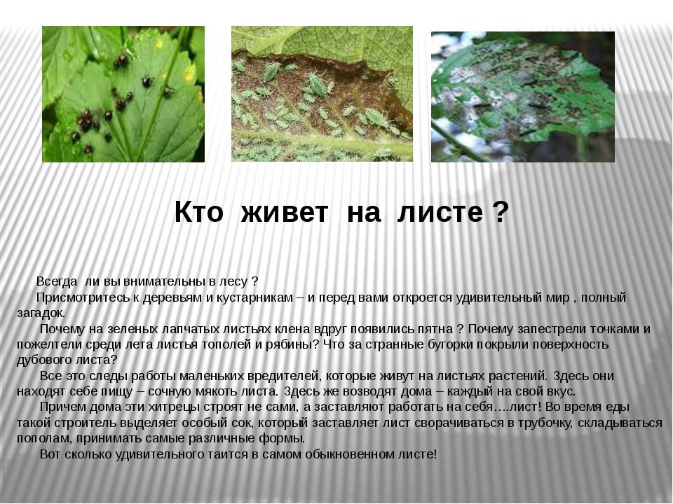 Кто живет на листе ? Всегда ли вы внимательны в лесу ? Присмотритесь к деревь...