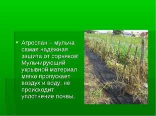 Агроспан – мульча самая надёжная зашита от сорняков! Мульчирующий укрывной ма