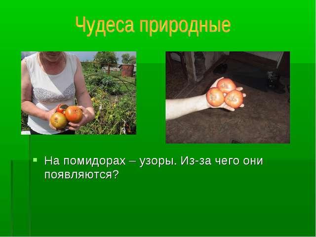 На помидорах – узоры. Из-за чего они появляются?