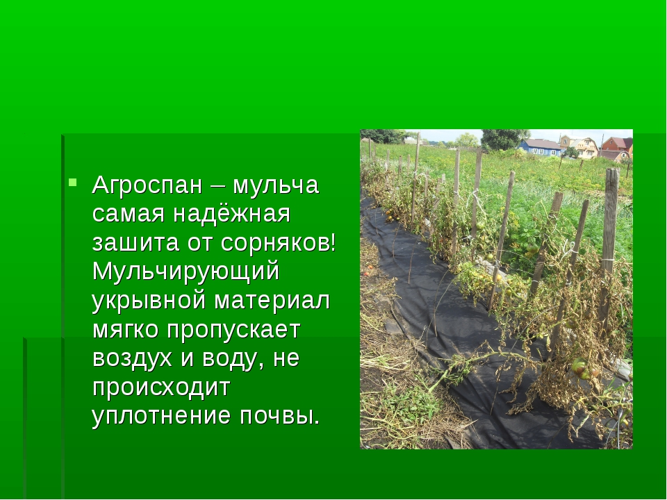 Агроспан – мульча самая надёжная зашита от сорняков! Мульчирующий укрывной ма...